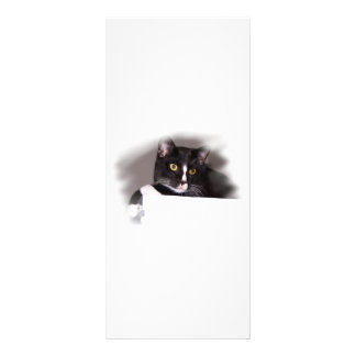 Black and white cat big yellow eyes looking right rack card