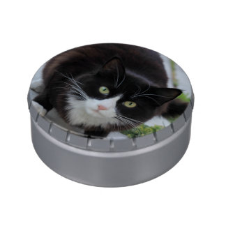 Black and white cat candy tin