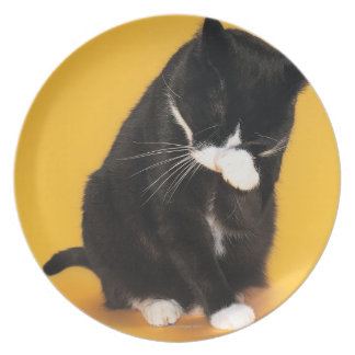 Black and White Cat cleaning face with paw Plate