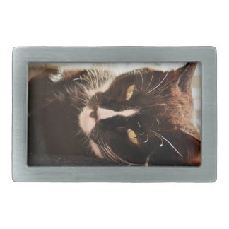 black and white cat face animal photo yellow eyes belt buckle