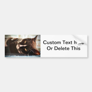 black and white cat face animal photo yellow eyes car bumper sticker