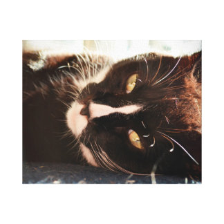 black and white cat face animal photo yellow eyes canvas prints