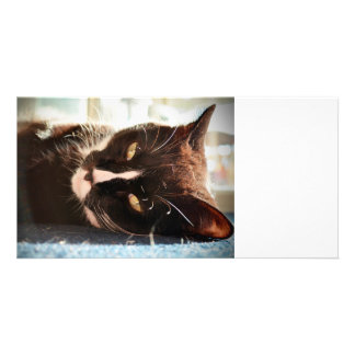 black and white cat face animal photo yellow eyes card