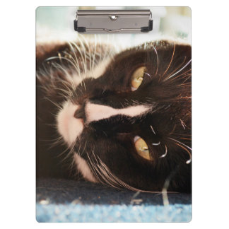 black and white cat face animal photo yellow eyes clipboard