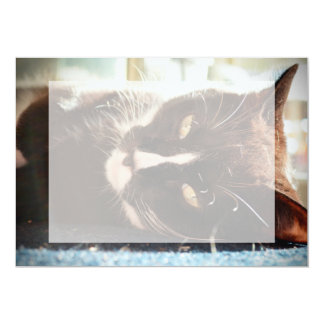 black and white cat face animal photo yellow eyes 5x7 paper invitation card