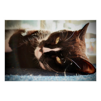 black and white cat face animal photo yellow eyes poster