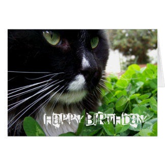 Black And White Cat Happy Birthday Card