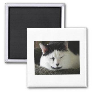 Black and White Cat Humor Magnet