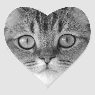 Black and white cat looking straight at you heart sticker
