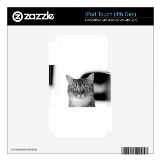 Black and white cat looking straight at you iPod touch 4G skin