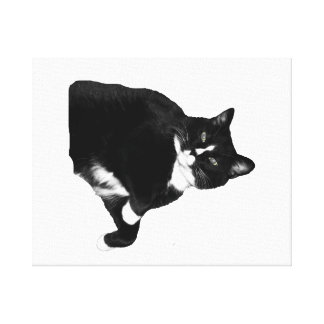 Black and White Cat Looking Up Cutout Gallery Wrap Canvas