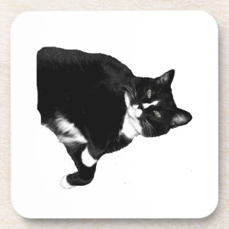 Black and White Cat Looking Up Cutout Coasters