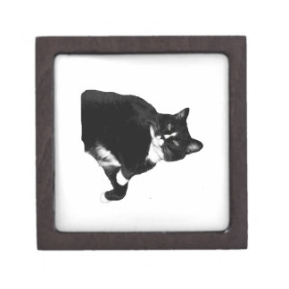 Black and White Cat Looking Up Cutout Gift Box