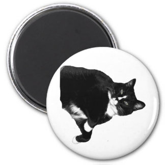 Black and White Cat Looking Up Cutout Magnet