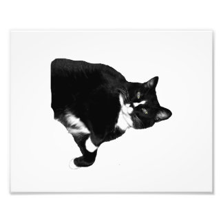 Black and White Cat Looking Up Cutout Photo Print