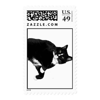 Black and White Cat Looking Up Cutout Postage Stamp