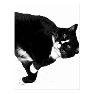 Black and White Cat Looking Up Cutout Postcard