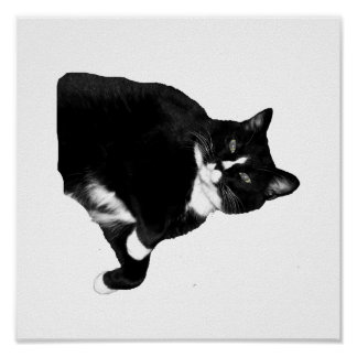 Black and White Cat Looking Up Cutout Posters