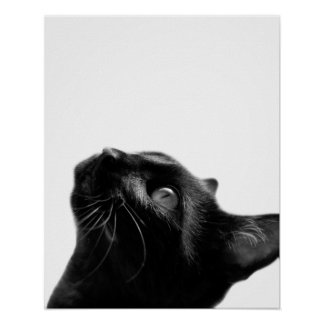 Black and white cat pet animal photo kids room poster