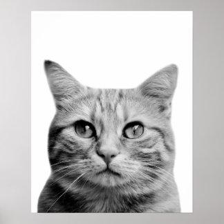 Black and white cat pet animal photo nursery poster