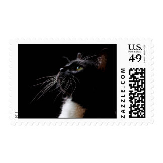 Black and White Cat photo on a stamp