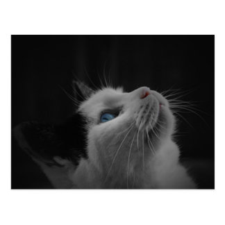 Black and White Cat Post Card