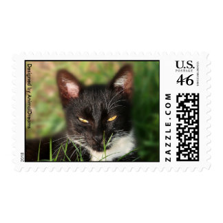 Black and White Cat Stamps