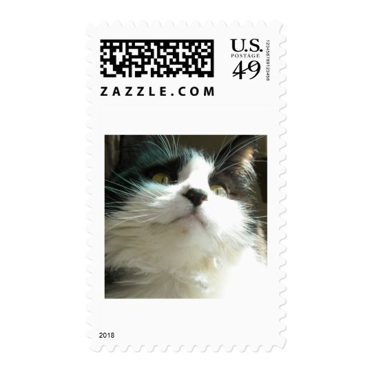 Black and White Cat Postage
