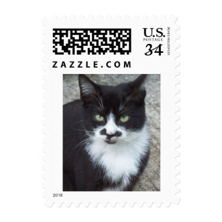 Black and White Cat Postage Stamps
