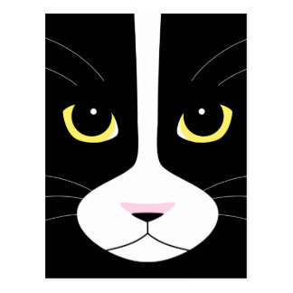 Black and White Cat Postcard