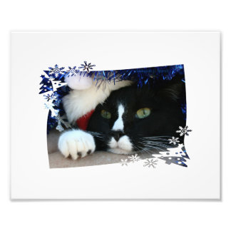 Black and white cat , santa hat, tinsel and a paw art photo