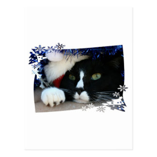 Black and white cat , santa hat, tinsel and a paw post card