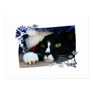 Black and white cat , santa hat, tinsel and a paw post cards