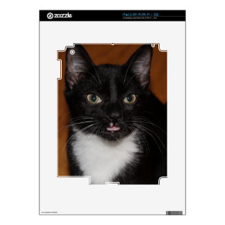 BLACK AND WHITE CAT SKINS FOR iPad 2