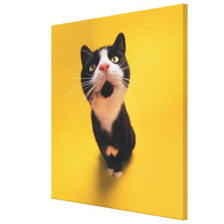 Black and white cat sniffing canvas print