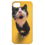Black and white cat sniffing iPhone SE/5/5s case