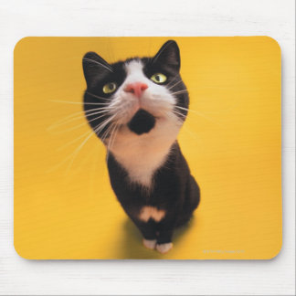 Black and white cat sniffing mouse pad