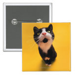 Black and white cat sniffing pinback button