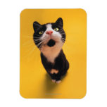 Black and white cat sniffing rectangular photo magnet