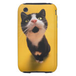 Black and white cat sniffing tough iPhone 3 cover