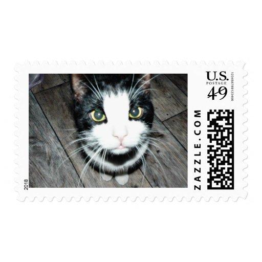 Black And White Cat Stamp