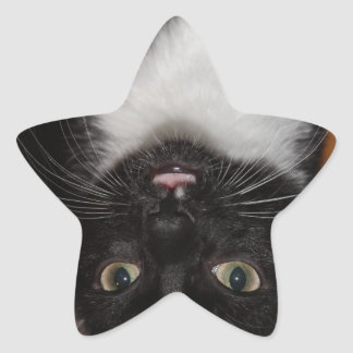 BLACK AND WHITE CAT STAR STICKER