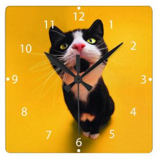 Black and white cat-tuxedo cat-pet kitten-pet cat square wall clock