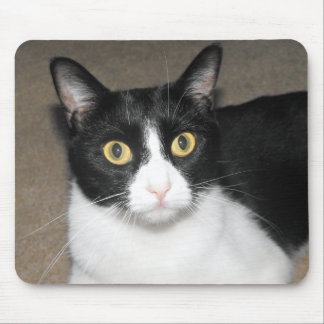 black and white cat with big yellow eyes mouse pad