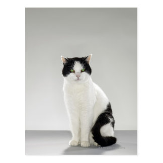 Black and white cat with glowing green eyes postcard