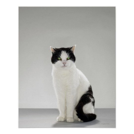 Black and white cat with glowing green eyes poster