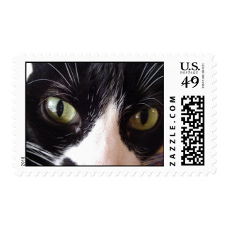 Black and White Cat with Green Eyes Postage