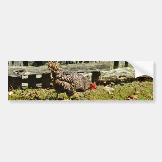 Black and white Chicken by fence Bumper Sticker