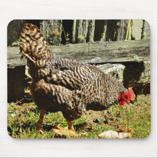 Black and white Chicken by fence Mouse Pad