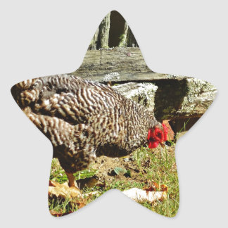 Black and white Chicken by fence Star Sticker